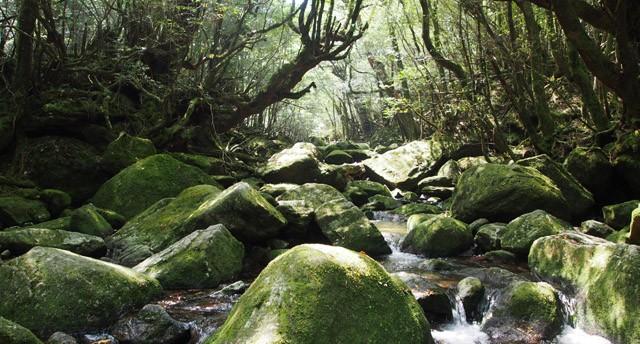 縄文杉、白谷雲水峡…山ガール憧れの地「屋久島」