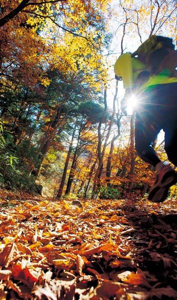 御岳山を目指して颯爽と走る安岡さん。木々の枝などが顔や頭に当たる危険があるので、トレイルランではキャップとサングラスが必須アイテム。紅葉が美しい秋。