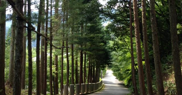 森がパワーをくれる!篠栗八十八箇所巡り 「松原渓のスポーツ百景」