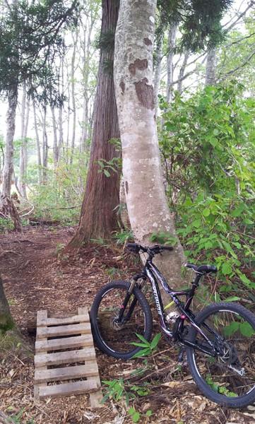 森の中にある小さな木のジャンプ台