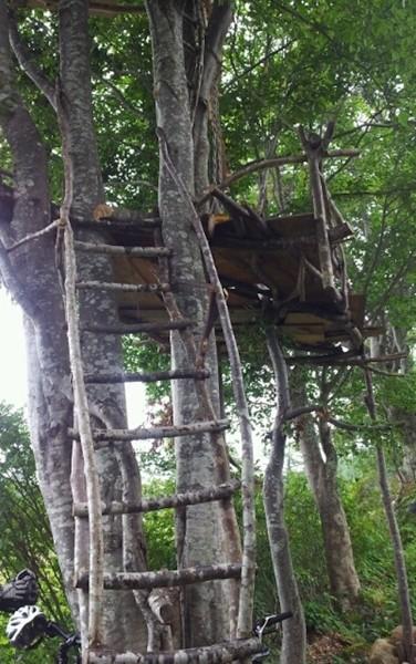 木の上のツリーハウスで休憩もできる♪