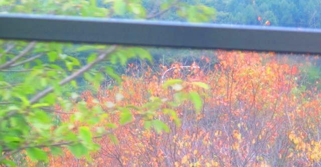 こちらはバスの車窓から。おぉ! ちらほらと紅葉が! 今回の旅は紅葉を芽でるのも目的です。