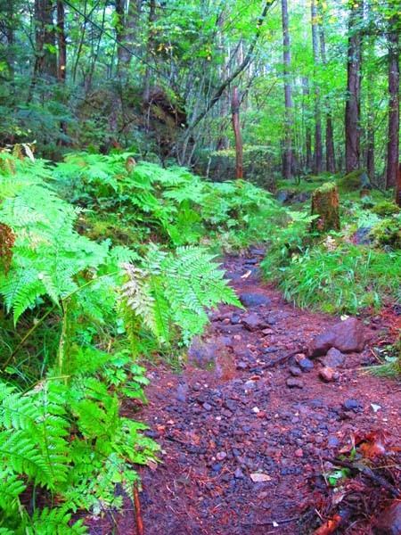 2日前の台風の影響か、登山道もしっとり。緑の葉に混ざって黄色に染まったものも。