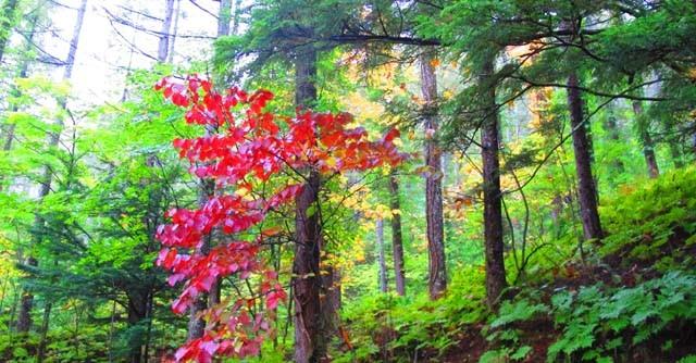 おぉ〜、深紅の紅葉! 天気はあいにくの雲りでしたが、テンションUPUP。