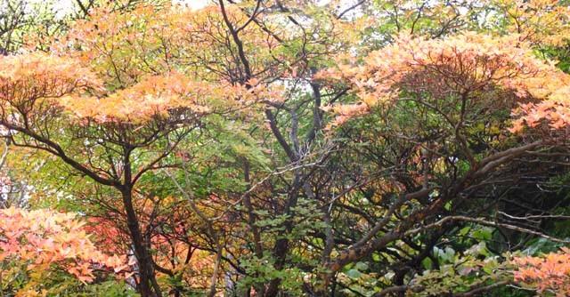 周辺には温泉特有の匂いが漂うなか、紅葉を芽でる気力も復活!
