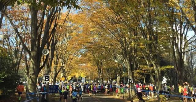 11月開催の『つくばマラソン』。秋色に染まる街路樹のコースが心地良い