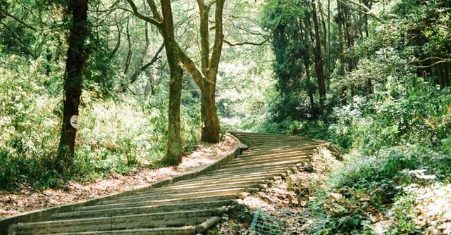 木漏れ日が降り注ぐ階段。しばらく見とれてしまうような、神々しい光景です。……にしても、いったい何段あるのでしょう?
