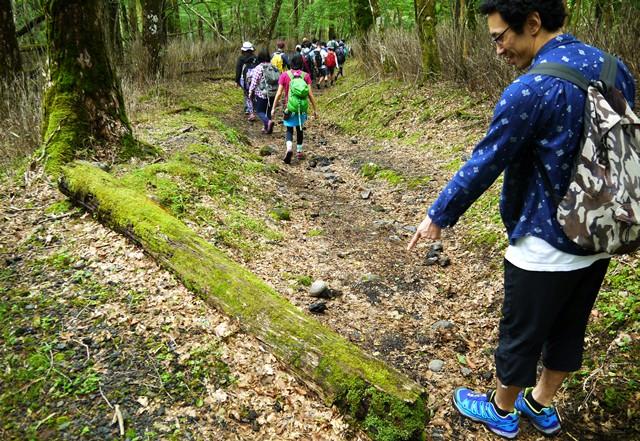 苔に包まれた木の数々に芸部も興味津々