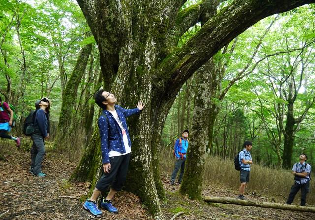 樹齢100年を超える大木には風格すら感じられる