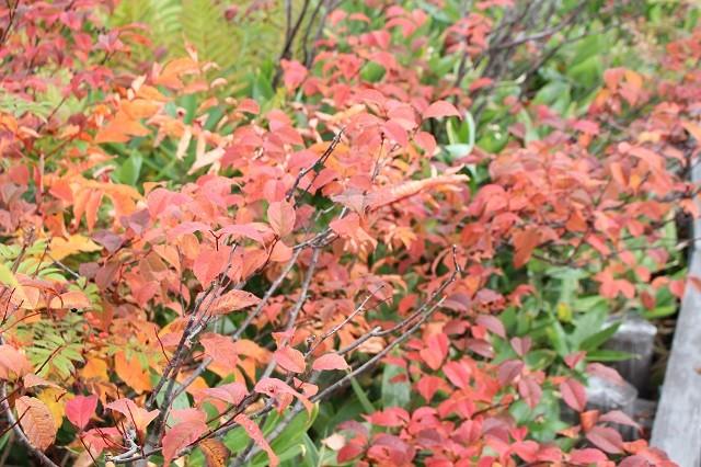紅葉は10月が見頃