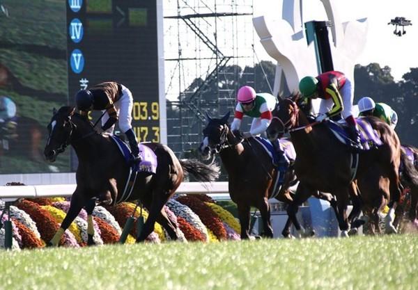 初のGI勝利となった菊花賞、キタサンブラックが大きく変わったのはこの時期だという