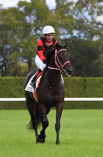 62歳1カ月29日での騎乗はJRA最年長記録、大井の的場文男騎手が京都を大いに盛り上げた