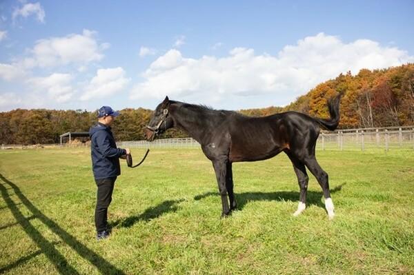 種牡馬からも解放され、悠々自適の放牧生活を満喫しているダンスインザダーク。功労馬に対する社台グループの理念もあり、引退馬として恵まれた環境で暮らしている