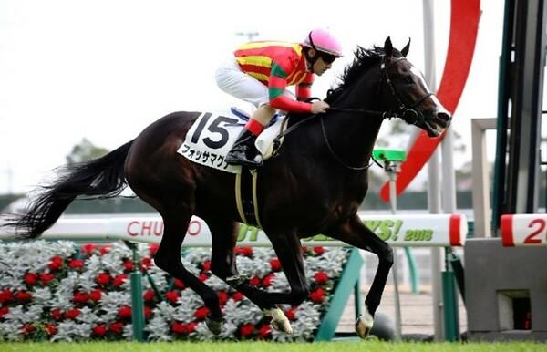 デビュー勝ちを収めた外国産馬のフォッサマグナ(撮影:日刊ゲンダイ)