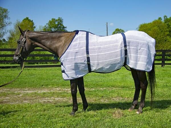 「牝馬の時代」を先取りしていた女傑ヒシアマゾン、その美しさと気品は今も色褪せていない(2017年8月9日 ポログリーンステーブルにて)