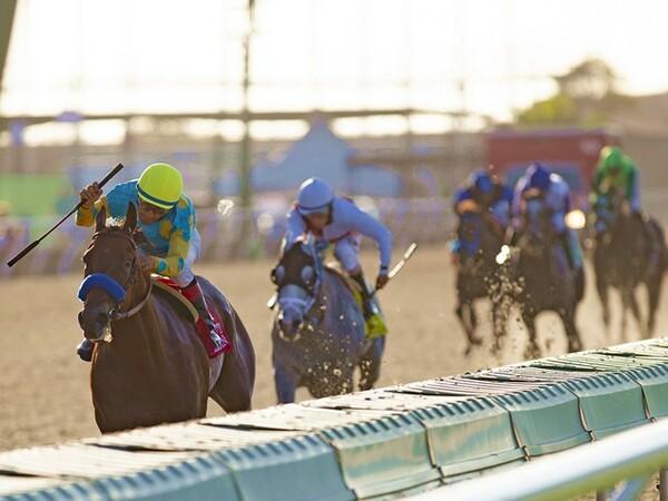2014年9月3日、G1デルマーフューチュリティで勝利を挙げるアメリカンファラオとヴィクター・エスピノーザ騎手(帽色黄)。これが同馬にとっての初勝利。