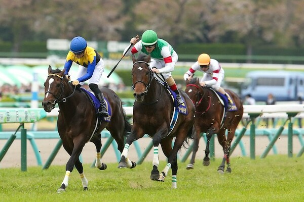 金鯱賞には昨年の最優秀3歳牡馬サートゥルナーリアも出走する