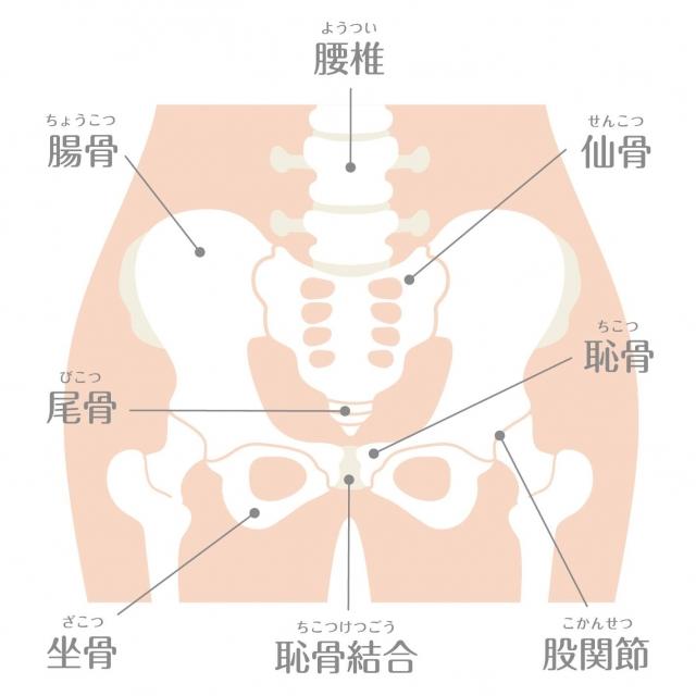 股関節は体の腿の外側と内側のちょうど真ん中あたり。奥の方にあるため、触れられない位置にあります。