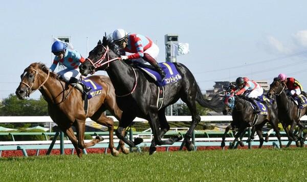 神戸新聞杯では、コントレイル(中央)が出走予定。競馬予想AI『VUMA』の予想は?