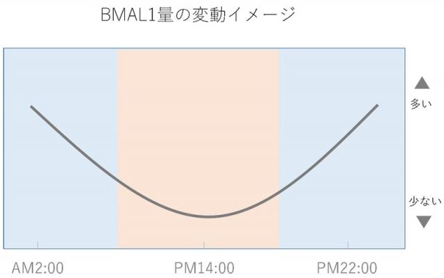 ※BMAL1の変動イメージ
