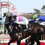 牝馬の活躍が目立つ東京新聞杯を分析する