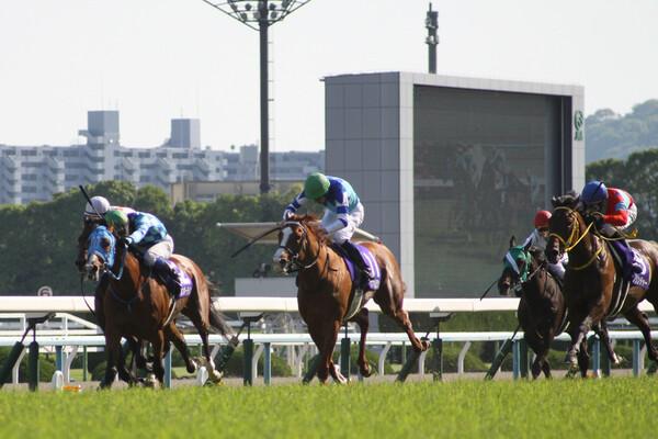 土曜はダイヤモンドSと京都牝馬Sの2重賞、日曜のフェブラリーSへ弾みをつける当たり馬券を手にしたい