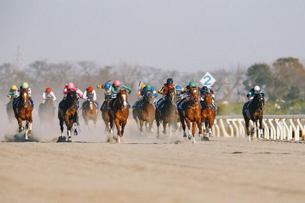 2021年最初のJRA・GIは砂の王者決定戦・フェブラリーS、確たる本命不在の大混戦の中で競馬予想AIが◎に指名した馬は?