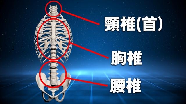 背骨は骨盤の上に24本骨が並んで構成されていて、大きく3つのパーツ(「頚椎」「胸椎」「腰椎」)に分かれている