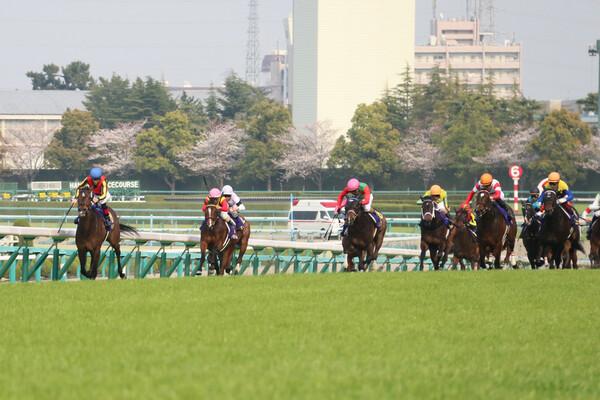 今週土曜の重賞はチューリップ賞とオーシャンステークス、GIをにらむ一戦で競馬予想AI『VUMA』が注目する馬は?