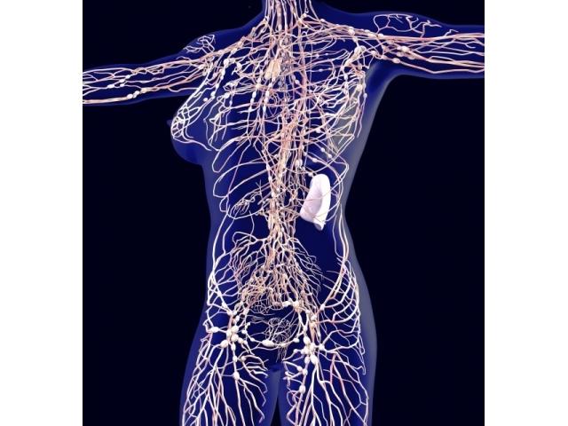なぜリンパの流れを良くすると身体にいいのか知っていますか?