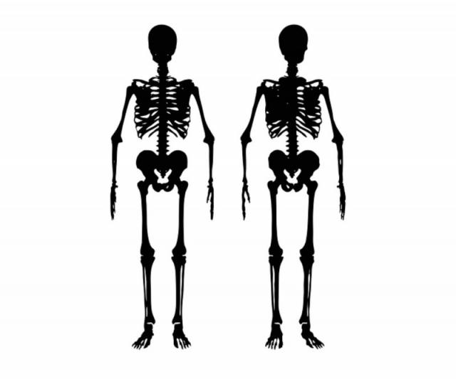 骨格の歪みの原因とは?