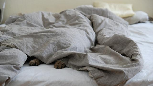 眠れないとき、ついついしてしまう「寝酒」 健康に問題ない?