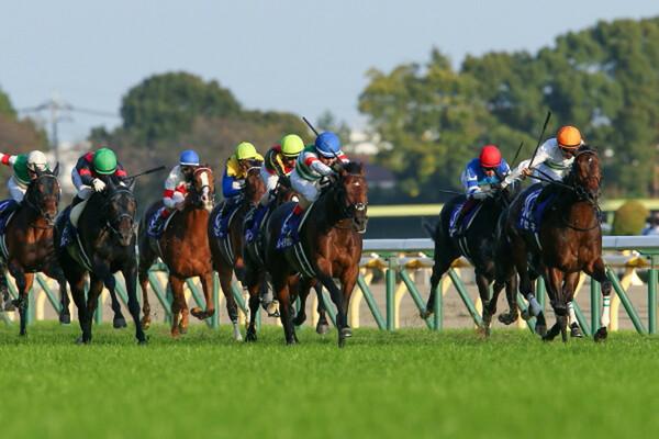 夏競馬のラストを飾る新潟記念と小倉2歳ステークス、競馬予想AIの本命に注目だ!