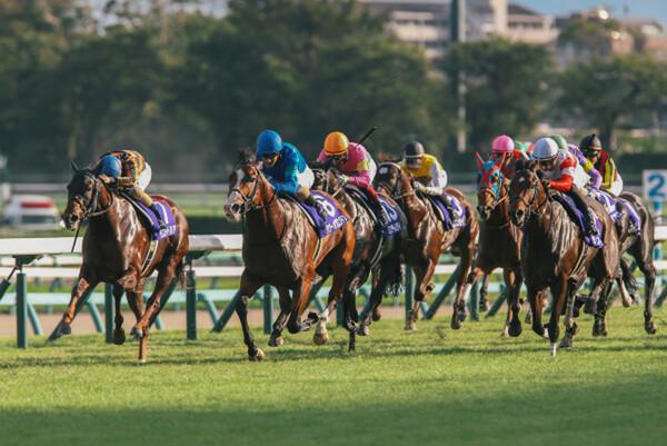 日曜の重賞2レースはいずれも秋の短距離路線を占うステップレース、競馬AIが主役に推すのはどの馬か?
