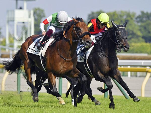 ダービー馬・シャフリヤール(右)が神戸新聞杯で指導、競馬予想AIのジャッジはいかに!?